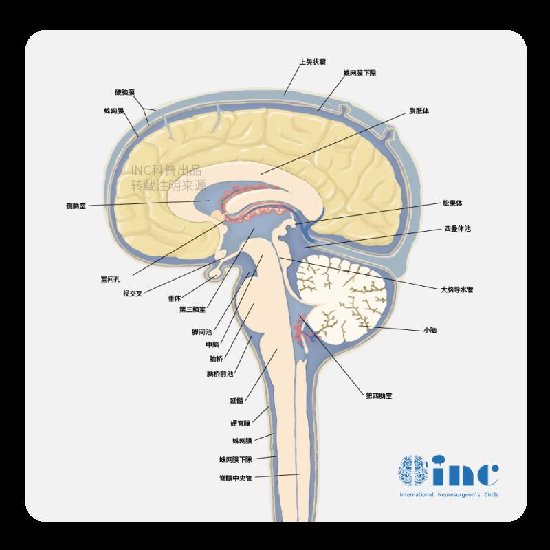 关于儿童颅咽管瘤,家长需要了解的那些事儿