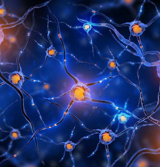 颅内海绵状血管瘤图片