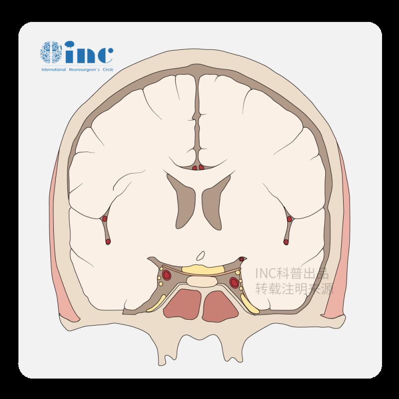 髓母细胞瘤基因能检查到吗?