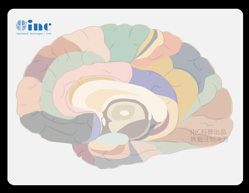 国外如何治疗脑肿瘤?能得到更好治疗吗?